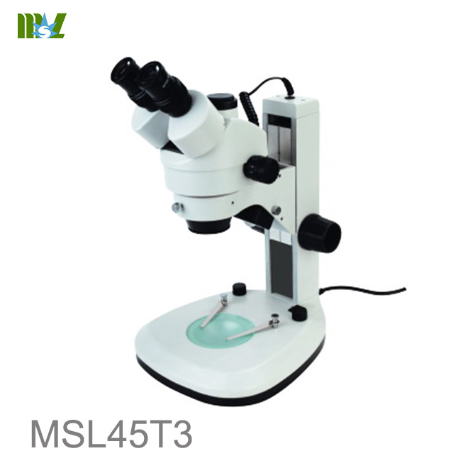 stereomicroscope images