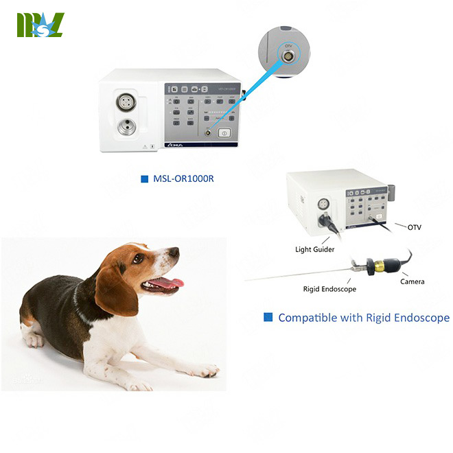 Veterinary Endoscopy
