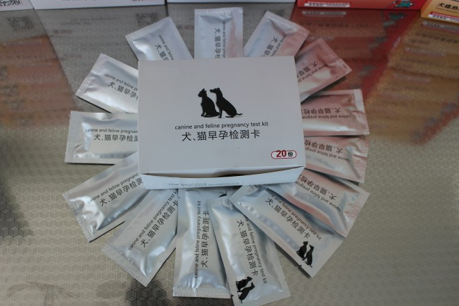 canine pregnancy test