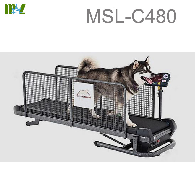 water dog treadmill